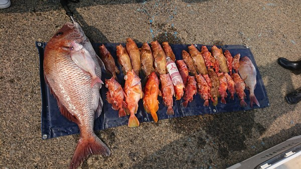 意外と早く訪れた鯛ラバ釣行 真鯛88cm アヤメカサゴ 沖カサゴ カサゴ アカハタ